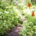 Wildflowers growing along the trail.- Jones Whites Creek Loop