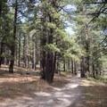 Jones Whites Creek Loop in the Galena Creek Recreation Area.- Jones Whites Creek Loop