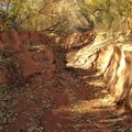 Flash flooding has carved deep wash walls in places.- Coyote Gulch