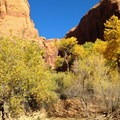 Autumn colors in Glen Canyon National Recreation Area.- Coyote Gulch