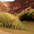 Confluence with the Escalante River.- Coyote Gulch