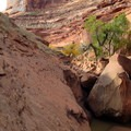 Slick rock ledge bypass of the boulder jam (looking upstream).- Coyote Gulch
