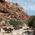 Sharing the road with the horses along the trail.- Havasu Falls Hike via Havasupai Trail