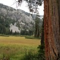 A meadow lined by incense cedars. - Granite Lake + Seven Up Pass