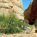 The trail quickly rounds a corner and enters a canyon.- Capitol Gorge to the Tanks