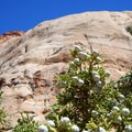 Juniper trees dot the canyon entrance.- Capitol Gorge to the Tanks