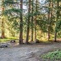 A site on the meadow at Spruce Grove Campground.- Spruce Grove Campground