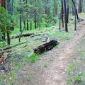 The gently sloping trail is perfect for hiking or mountain biking.- Kelly Canyon