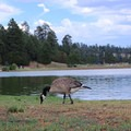 Walnut Canyon Lakes, next to Campbell Mesa, are popular for bird watching and fishing.- Campbell Mesa Trails