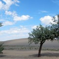 There are a fair number of shade trees scattered throughout the park.- Bruneau Dunes State Park