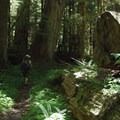 Hiking through an old-growth forest on the Green River Trail.- Goat Mountain + Green River Loop