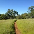 A welcome and smooth section of the Guardian Trail.- Upper Bidwell Park