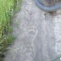 A multi-use trail in Upper Park.- Upper Bidwell Park