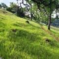The Live Oak Trail.- Upper Bidwell Park