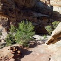 The trail surface changes from sand to gravel to rock several times along the way.- Hickman Natural Bridge