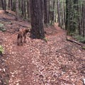 Dogs are allowed off leash if they are under voice command.- Paradise Royale Mountain Bike Trail
