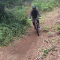 The downhill section of the Mad Queen's Tango.- Paradise Royale Mountain Bike Trail