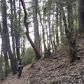 Finishing the climb in the Jester's Hat section.- Paradise Royale Mountain Bike Trail