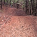 Old logging roads are now filled with bank turns and jumps on the Mad Queen's Tango descent.- Paradise Royale Mountain Bike Trail
