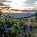 Wildflowers and views.- Lands End Observatory