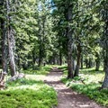 The rocky crest becomes a mix of forest and meadow.- Crags Crest Trail
