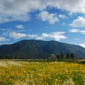 Wildflowers and Mount Elden.- Buffalo Park Hike