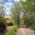 A riparian arch beside the Steamboat Ditch.- Steamboat Ditch Trail