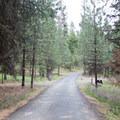 Campground road.- Ochoco Divide Campground