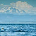 Paddlers can expect to see a wide variety of wildlife as well as views of Mount Baker throughout the paddle.- Patos Island