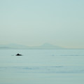 Porpoises and seals are common along the exposed paddle to Patos Island.- Patos Island