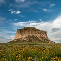 Wildflowers are plentiful in July.- Pawnee Buttes Trail