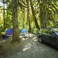 Typical campsite at Goodell Creek Campground.- Goodell Creek Campground + Group Sites