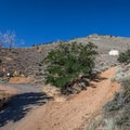 The trailhead at the bottom of the four-wheel drive road. Parking is 30 feet further on the pavement.- Ophir Peak / Mount Davidson