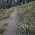 Wildflowers along the trail at the junction with Warfield Creek Trail.- South Fork of Warm Springs to Red Warrior