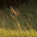 Beautiful grasslands surround the campground.- Trail of the Mourning Dove