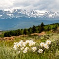 Wildflowers abound along the route.- Mineral Belt Trail