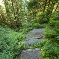 Beginning of the trail leading down to Rainbow Falls.- Rainbow Creek and Rainbow Falls