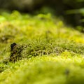 Moss along a fallen log.- Boulder Ridge Trail Hike