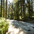 Park Creek adjacent to Park Creek Campground.- Park Creek Campground