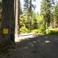 Park Creek campsite.- Park Creek Campsite