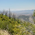 Big views from along the Silvercrest Trail.- Palomar Mountain State Park