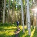Hiking among the aspens on Burlfriends Trail.- La Sal Pass