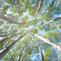 Lie on your back and enjoy the aspen grove.- La Sal Pass