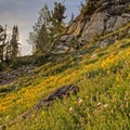 Granite boulders and a sea of flowers.- Catherines Pass Hike