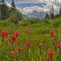 The Indian paintbrush goes wild here.- Christmas Meadows Campground