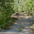 Typical campsite at the Hope Valley Resort + Campground.- Hope Valley Resort + Campground