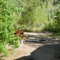 Typical site at Kit Carson Campground.- Kit Carson Campground