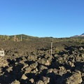 Lava flows surround the scenic byway.- McKenzie Pass Scenic Byway
