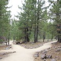 An overview of the trail.- Devastated Area Interpretive Trail