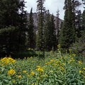 Wildflowers on the McCullough Gulch Trail.- McCullough Gulch Trail
